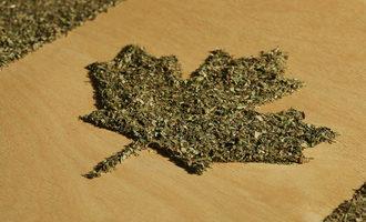 Canadacannabis_lead