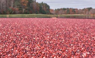 Oceanspraycranberries_lead