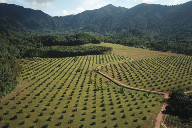 Palm tree forest farm