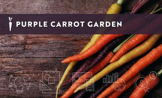 Purplecarrotgarden_lead
