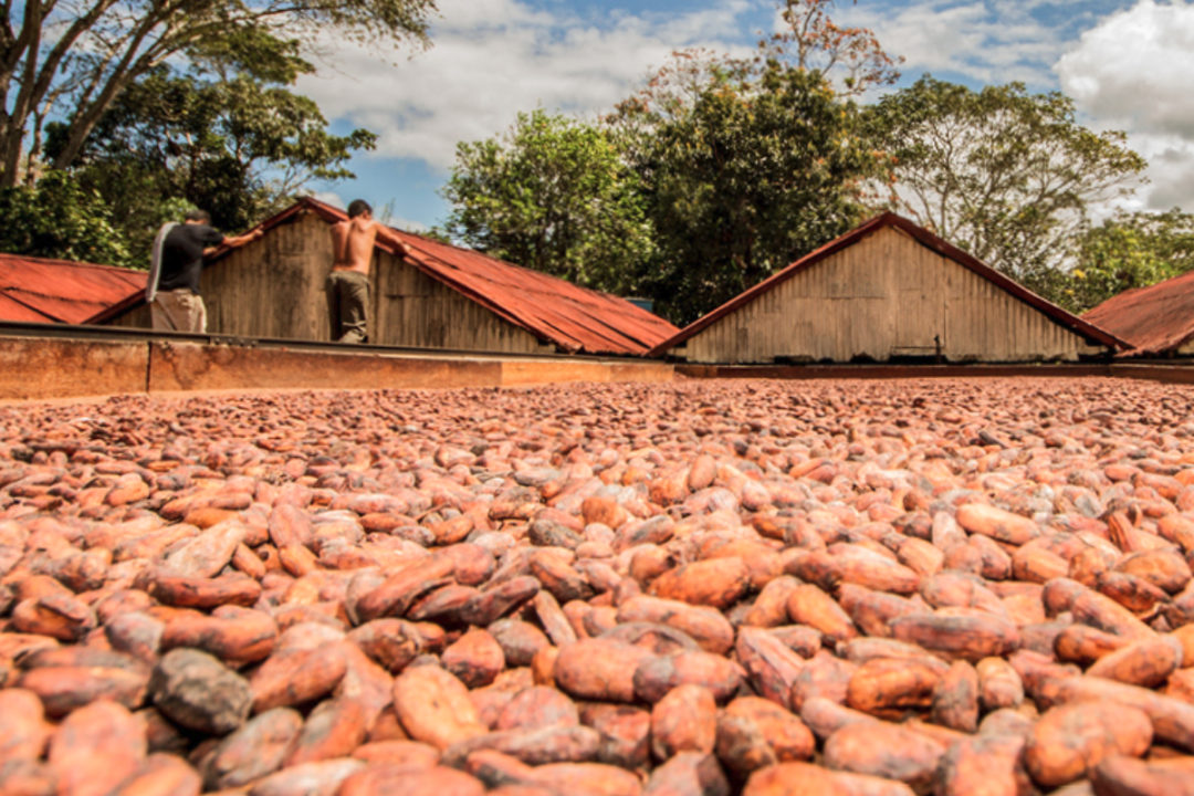Cargill West African cacao processing site