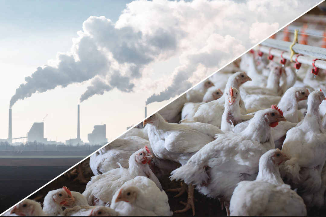 Chicken farm and greenhouse gas emissions