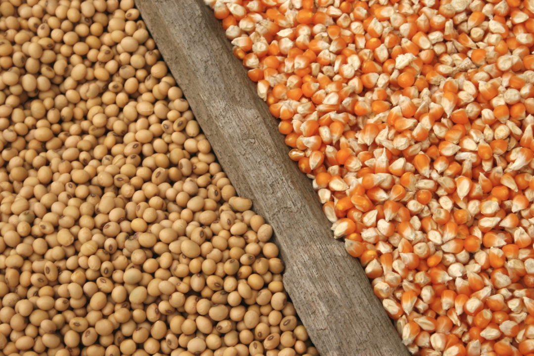 Soybeans and corn