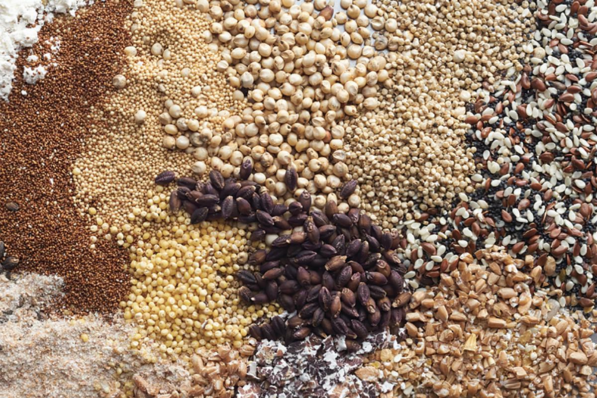 Ardent Mills grains