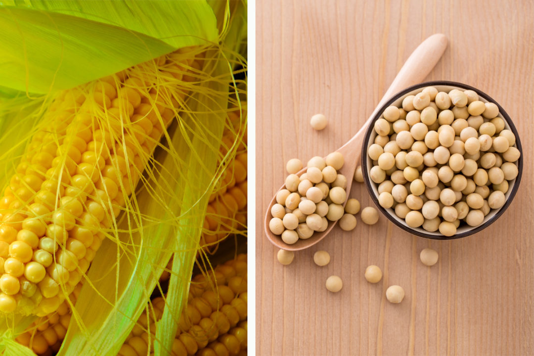 Corn and soy