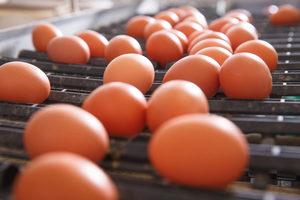 Eggproduction_lead