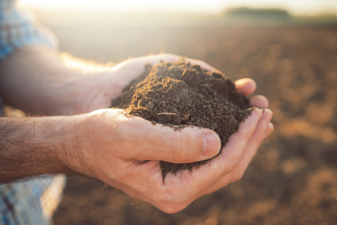 Farmer with handful of soil
