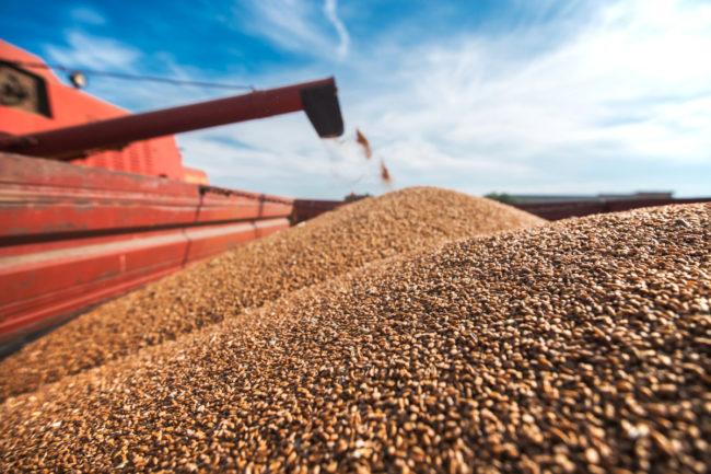 Grain processing