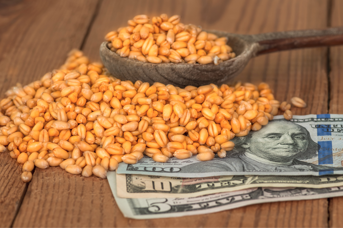 Wheat grains on money