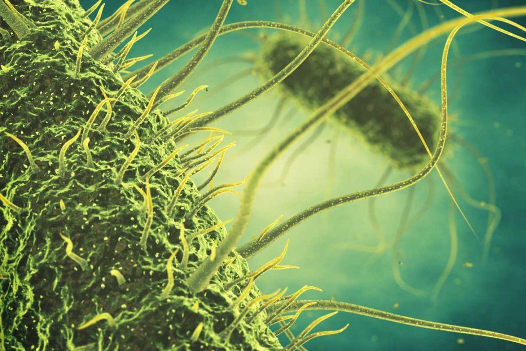 FSMA, Pathogens