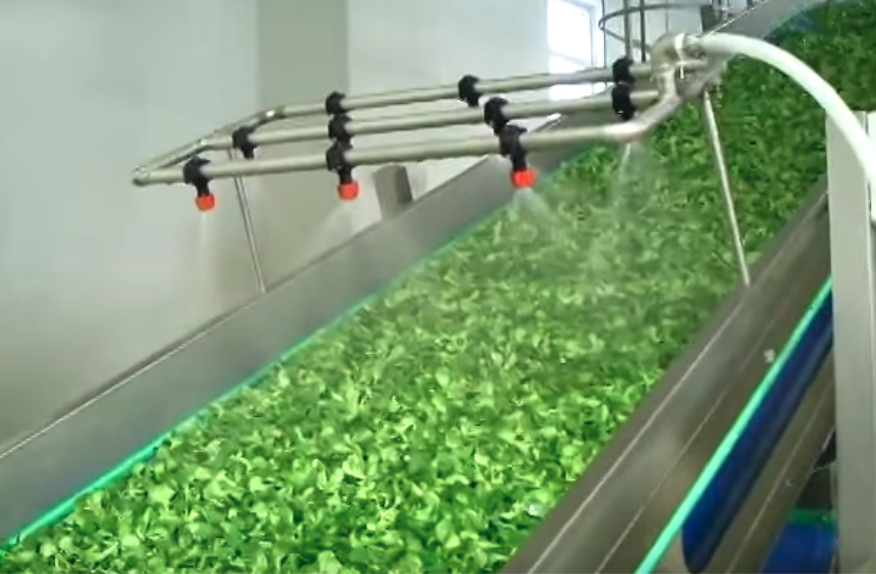 Post-harvest industrial lettuce washing with chlorine