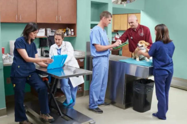National Veterinary Associates pet care office
