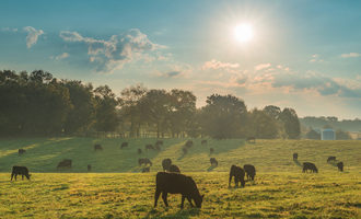 Cattlegrazing_lead