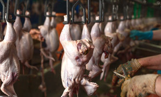 Poultryproduction_lead
