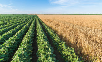 Wheatsoybeans_lead