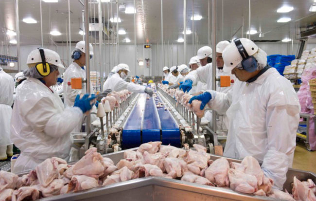 Tyson Foods poultry processing plant line