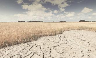 Wheatdrought_lead