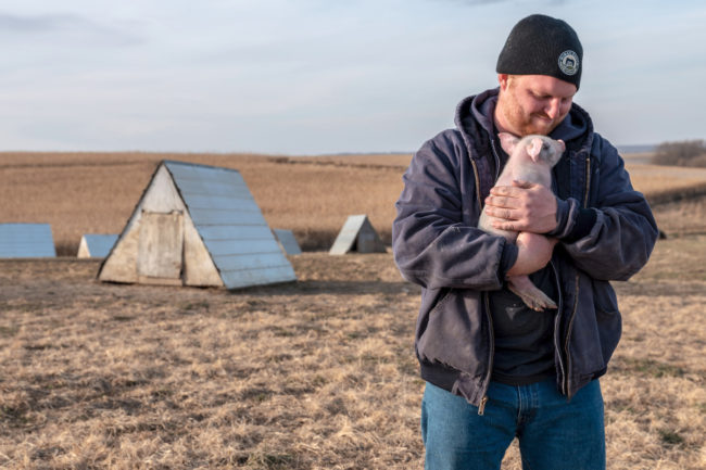 Niman Ranch farmer holding piglet