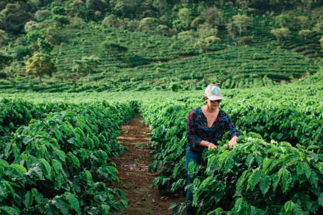 Starbucks sustainable farmer