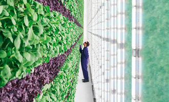 Plentyverticalfarm lead