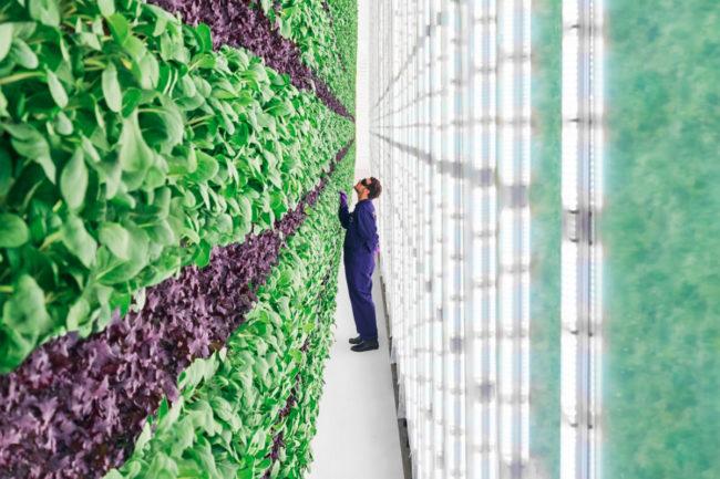 Plenty Unlimited Inc. vertical farm
