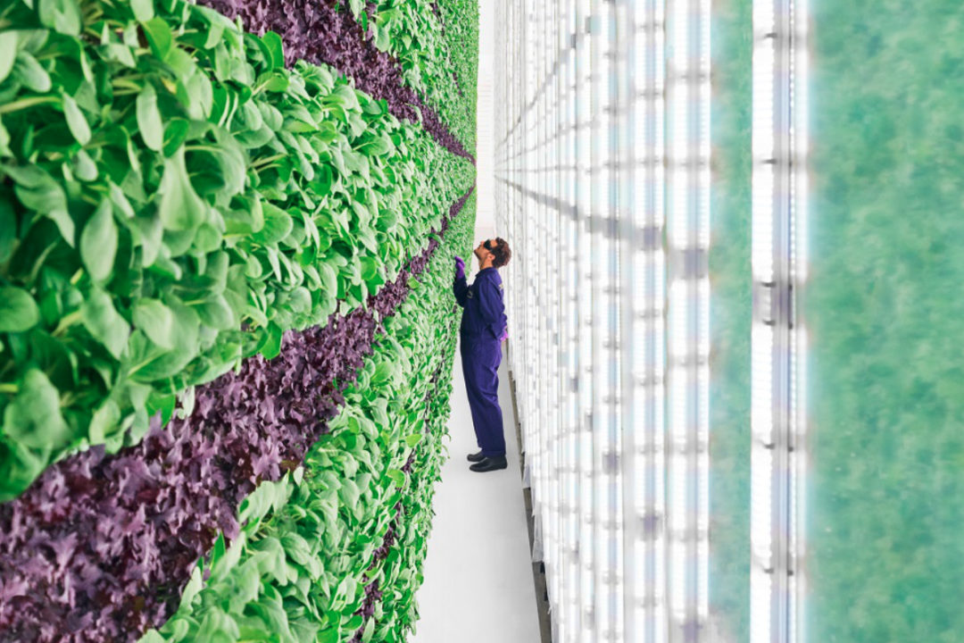 Plenty Unlimited Inc. vertical farm