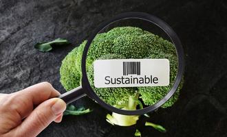 Sustainable food lead