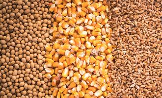 Soybeanscornwheat lead