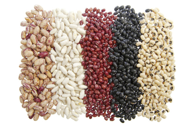 edible beans