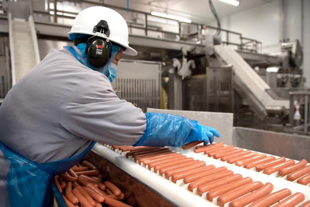 Maple Leaf Foods hot dog manufacturing line and worker