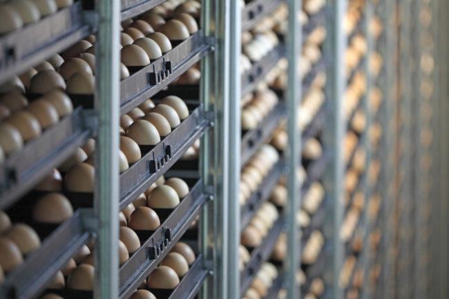 Egg production storage