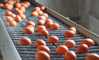 Eggsonconveyorbelt lead