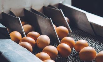 Eggproduction lead