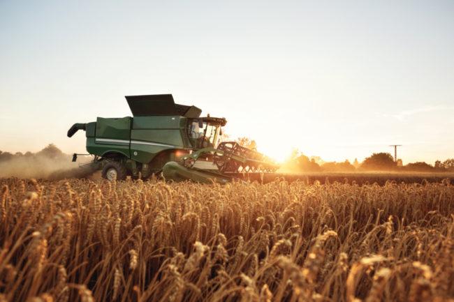 Wheat harvesting combine