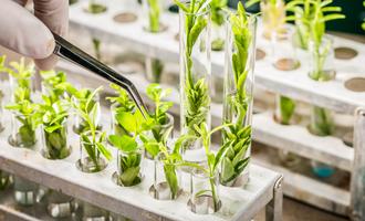 Plant breeding lead