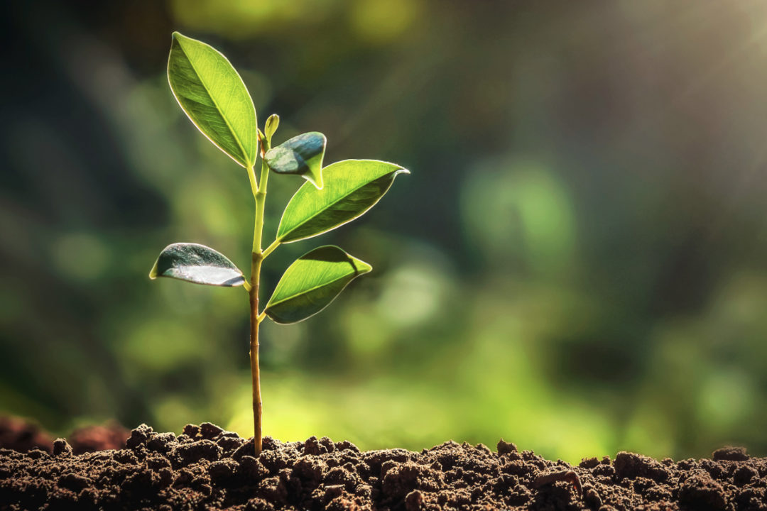 Tree sprout, sustainability