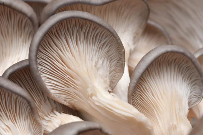 mushroom containing ergothioneine