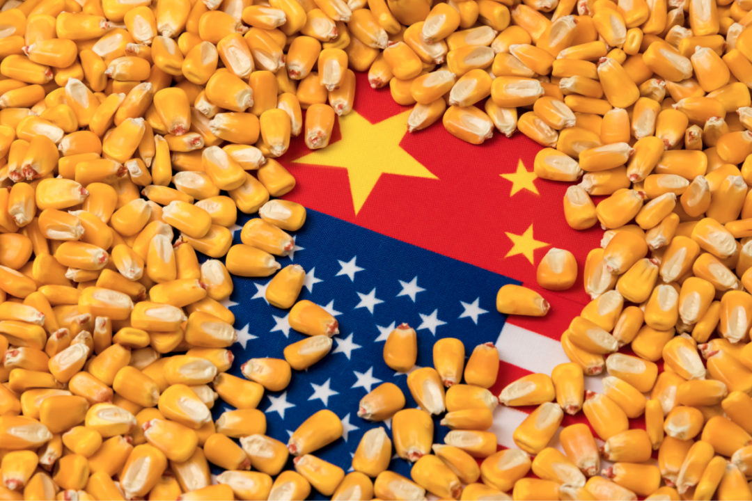 USA and China flag covered by corn kernels
