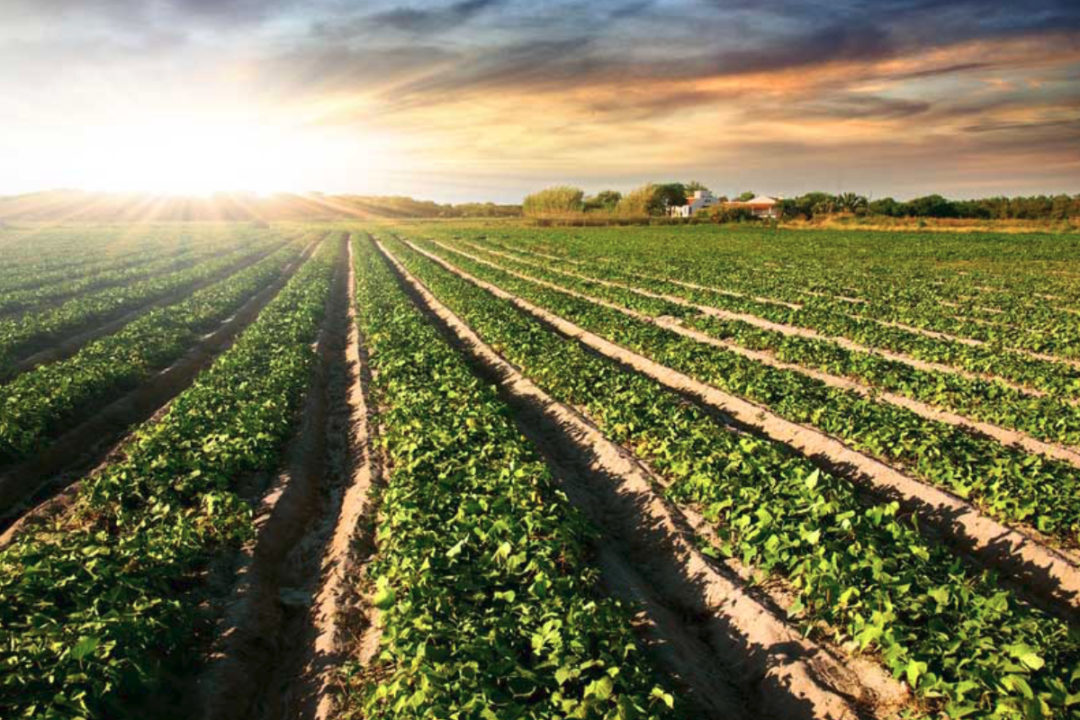 General Mills sustainable farmland