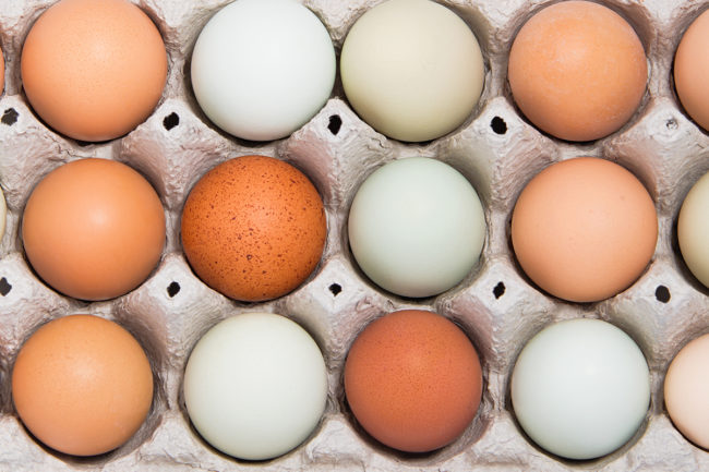 Close up egg carton