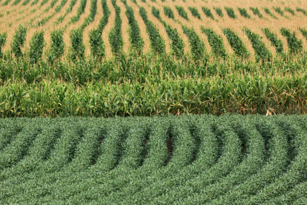 Corn and soybean fields