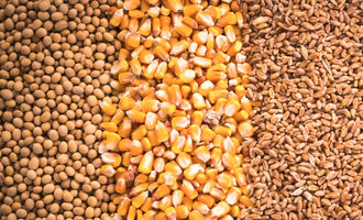 Soybeanscornwheat lead