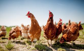 Diana food animal welfare lead