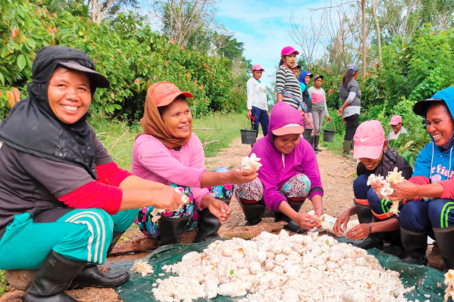 Indonesian workers on Mondelez and Olam sustainable commercial cocoa farm