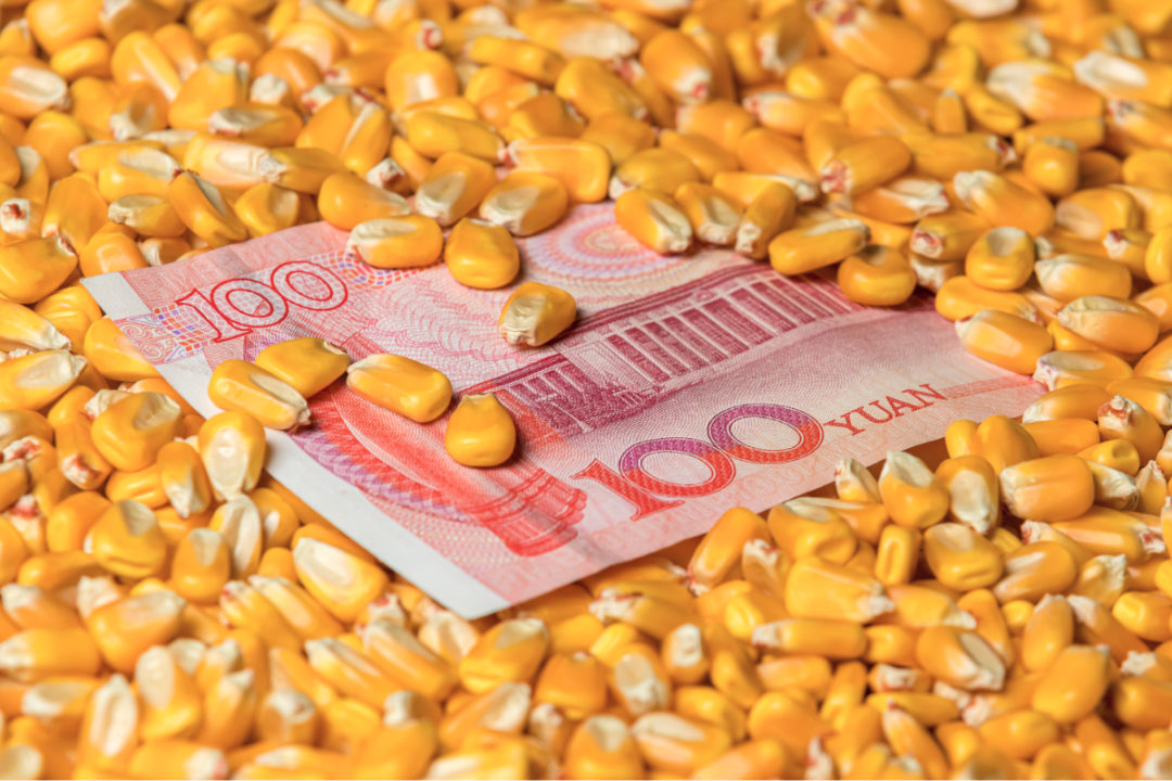 Chinese 100 yuan renminbi bill surrounded with corn kernels
