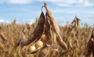 Soybeanplant lead