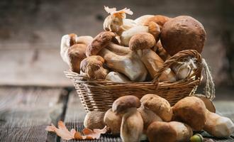 Ffp mushrooms lead