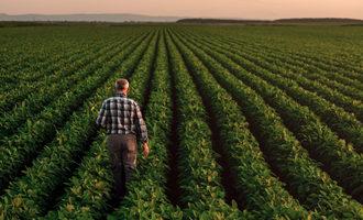 Farmerinfield lead
