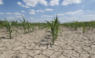 Droughtcornfield lead