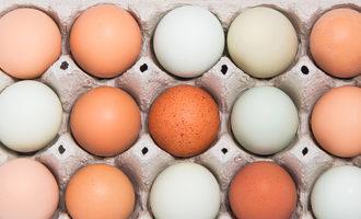 Eggsincarton lead4